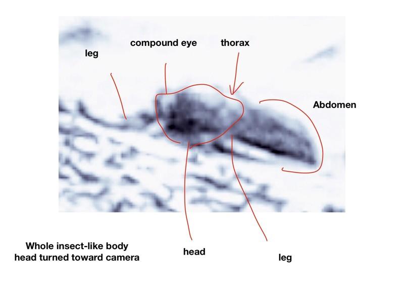 El profesor emérito de la Ohio University, William Romoser, analizó varias fotos de diversos rovers de Marte y encontró formas similares a insectos y reptiles en las imágenes, apareciendo para verificar que la vida existe en Marte