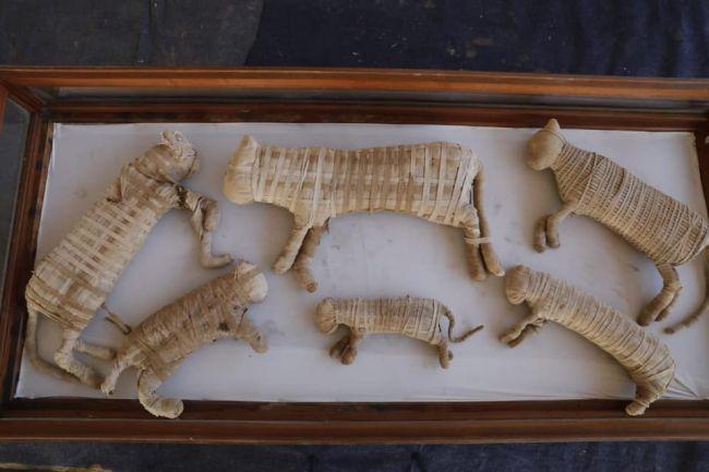 Se encontraron varias momias de gatos pequeños en la tumba