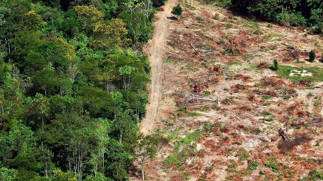 La Amazonía ha alcanzado un punto de inflexión y ha comenzado a autodestruise