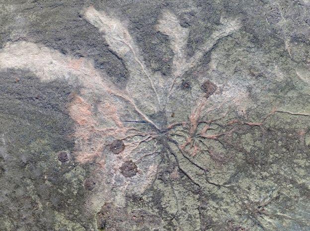 Hallan el bosque más antiguo del mundo en una cantera de New York