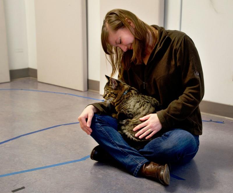 Los gatos ven a sus humanos como sus «padres» y también los extrañan cuando los dejan solos