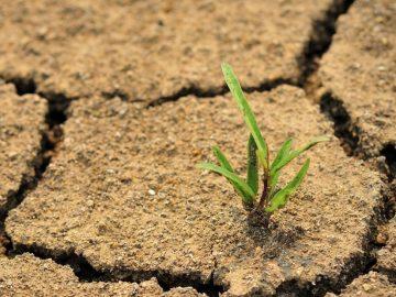 Las plantas emiten sonidos ultrasónicos cuando están a punto de morir, afirma investigación