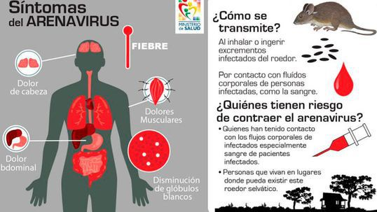 Nuevo virus aparece en Brasil: «arenavirus» causa una muerte por fiebre hemorrágica