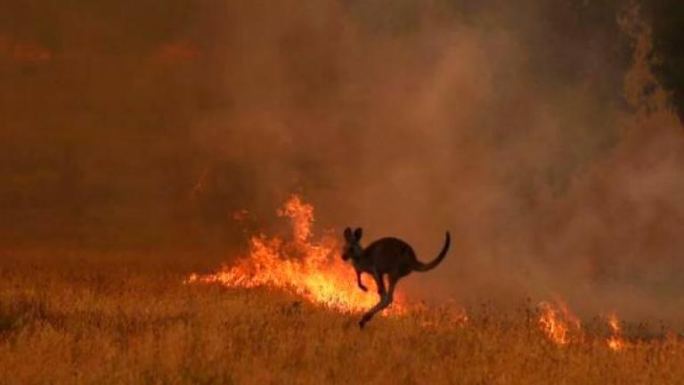 Dos incendios se unen en Australia creando un «megaincendio» que cubre 6.000 km cuadrados
