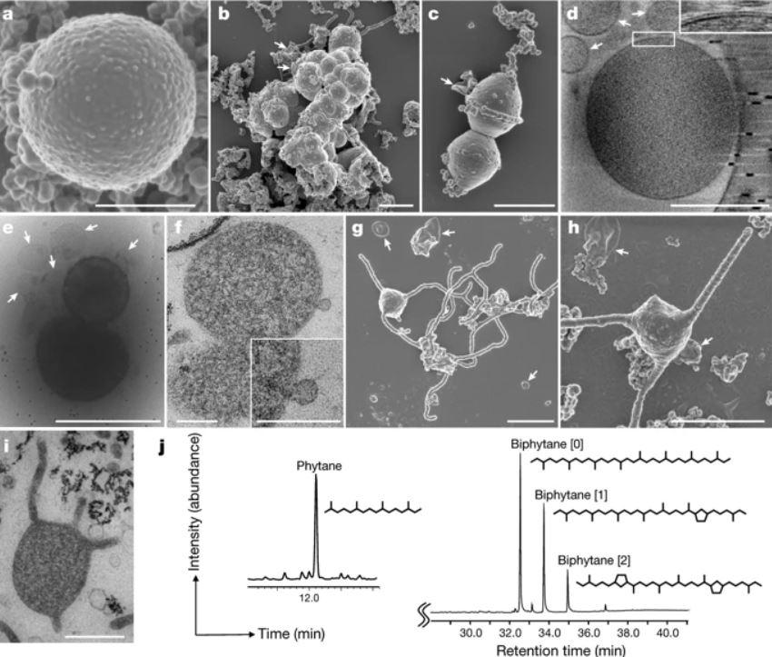 Cultivan en laboratorio a organismo que revelaría el origen de la vida