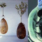 Adiós a los ataúdes: entierro ecológico que brinda vida a un nuevo árbol