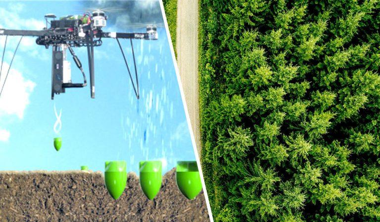 Científicos plantarán mil millones de árboles usando drones e ingredientes «secretos»