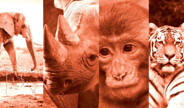 Científicos lanzan plan desesperado para evitar la sexta extinción masiva en la Tierra