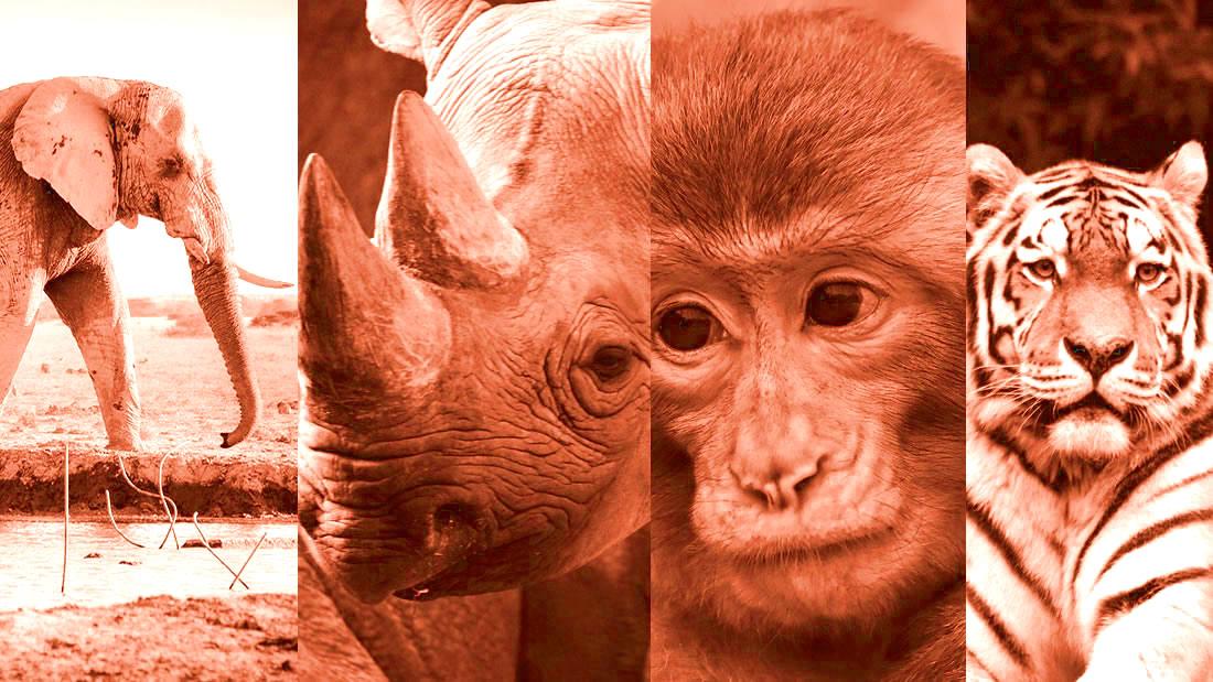 Científicos lanzan un plan desesperado para evitar la sexta extinción masiva en la Tierra