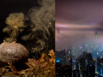 Somos «bombardeados» por nanopartículas de esporas de hongos desde la atmósfera