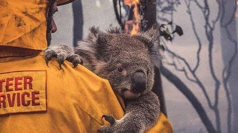 Tú puedes ser voluntario en Australia y ayudar a cientos de personas y animales