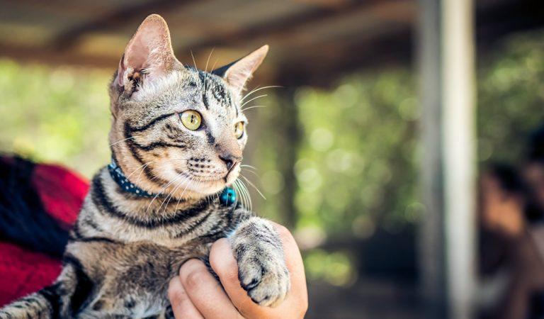 Hoy es el Día Internacional del Gato: ¿por qué celebramos esta fecha a los mininos?