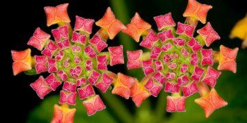 Geometría Sagrada: principio presente en el diseño de la naturaleza