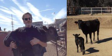 Joaquín Phoenix salva de una «horrible muerte» a una vaca y a su cría apenas nacida