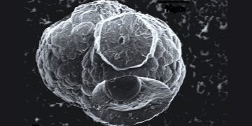 Hallan nueva forma de vida en burbujas de petróleo y en condiciones extremas