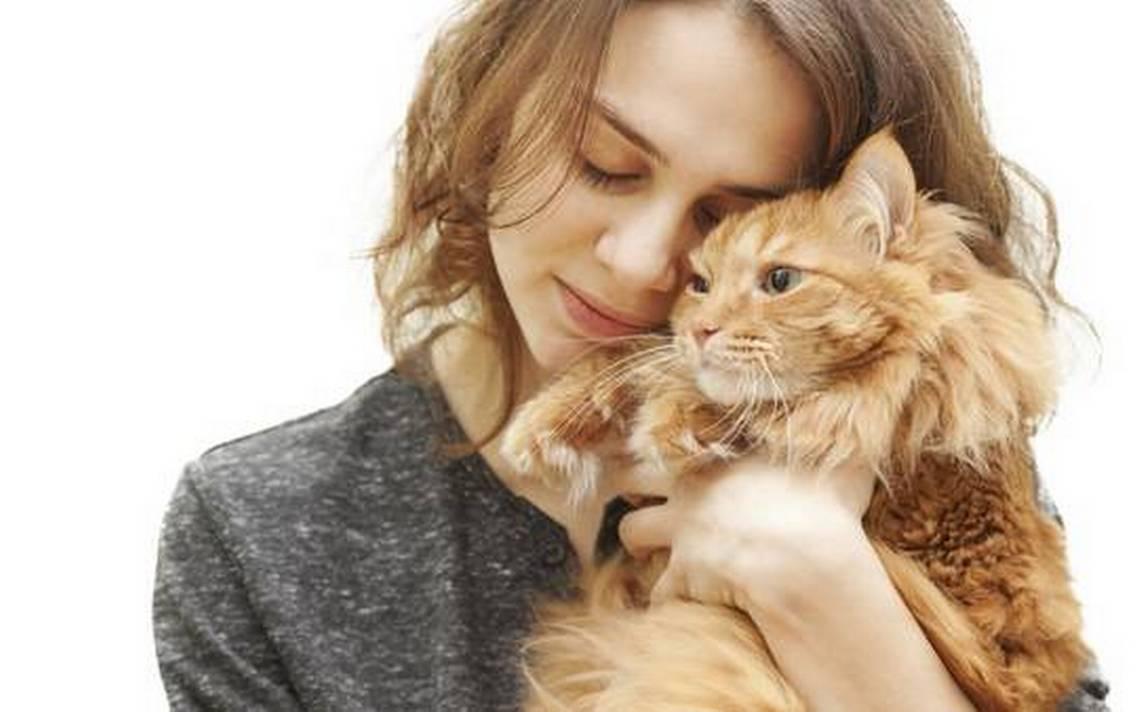 Los gatos tienen un efecto sanador en el ser humano