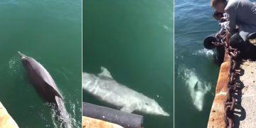 Delfines regresan a las costas de Cerdeña luego de la cuarentena en Italia
