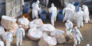 Detectan un brote de gripe aviar H5N6 en Filipinas