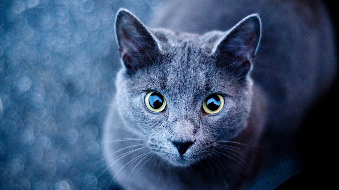 Los gatos tienen un efecto sanador en el ser humano (Vídeo)