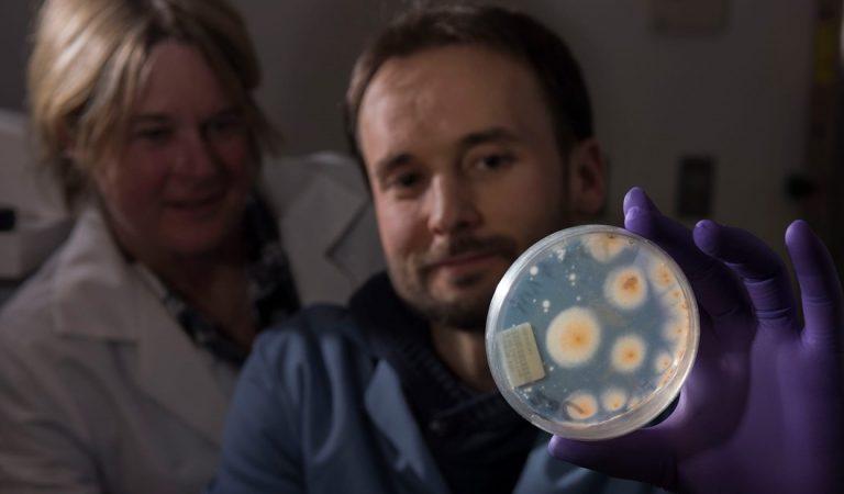 Hallan vida microbiana en las profundidades de la Tierra debajo del fondo del océano