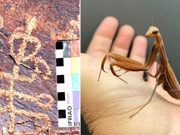 ¿Insectoide? Hallan petroglifo de una criatura «mitad humano y mitad mantis» en Irán