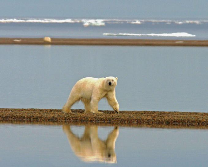 Polo Norte estará completamente libre de hielo en verano antes de 2050, incluso si reducimos las emisiones, indica investigación