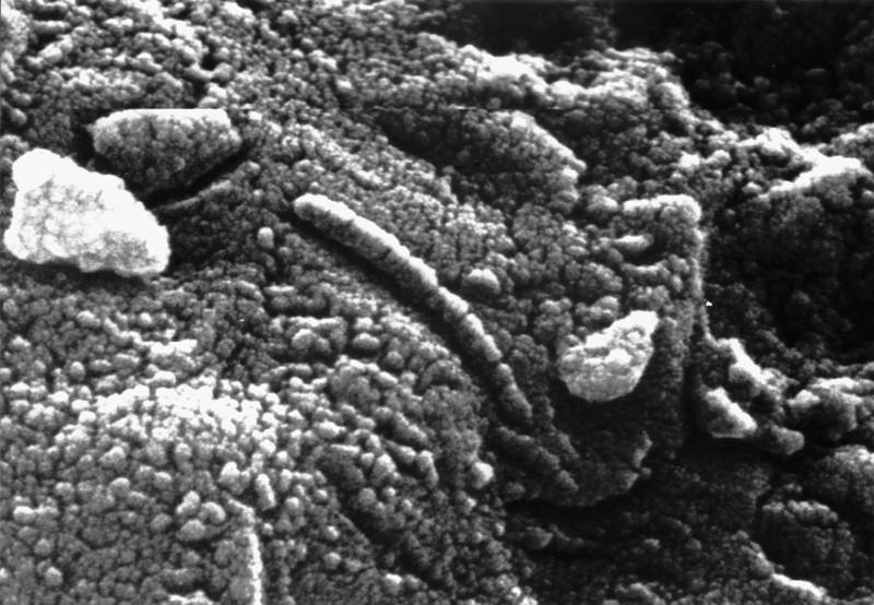 Hallan compuestos orgánicos en meteorito marciano de 4 mil millones de años