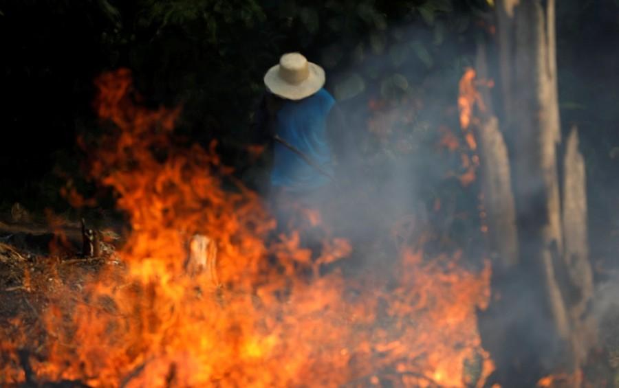 Madereros talan y queman el Amazonas mientras todos estamos en cuarentena
