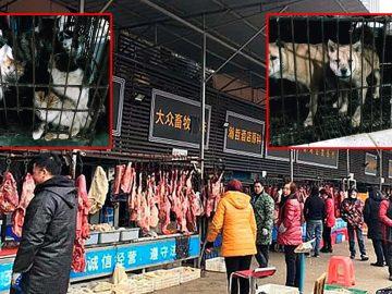 Mercados de China vuelven a vender perros, gatos, pangolín, murciélagos y más... A pesar de todo lo que pasó