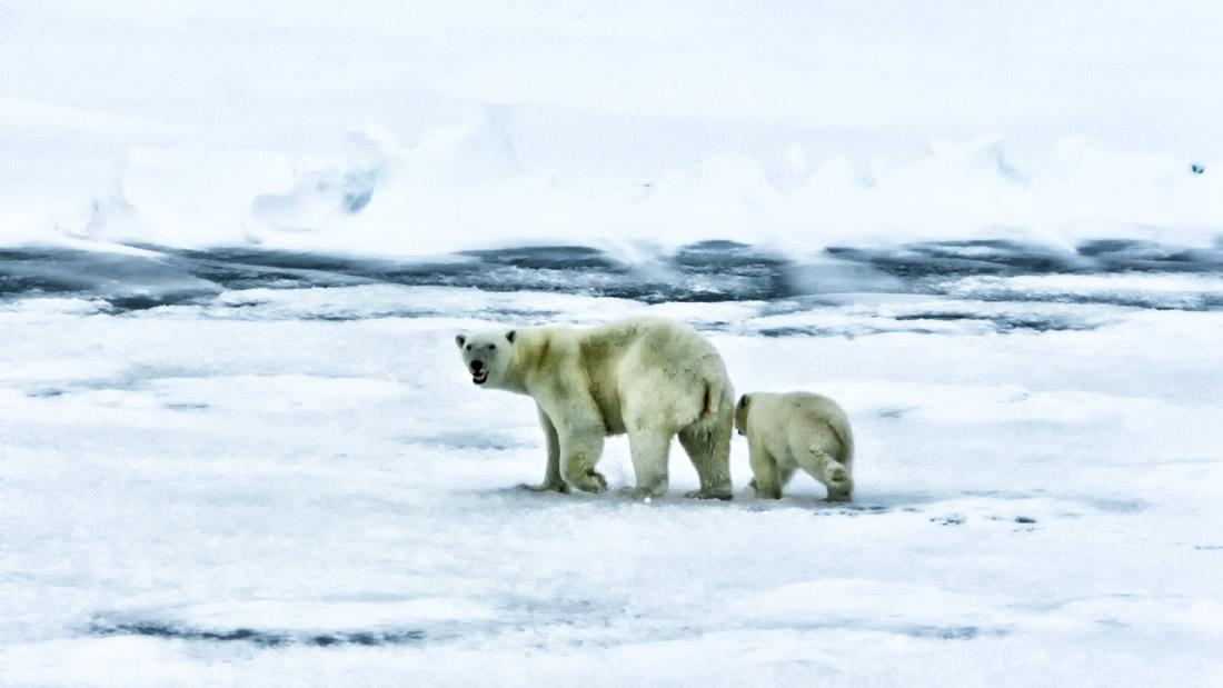 Polo Norte estará completamente libre de hielo en verano antes de 2050, incluso si reducimos las emisiones de CO2, indica investigación