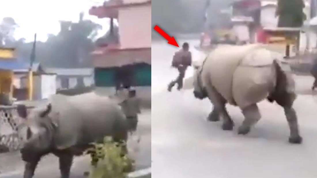 Rinoceronte deambula por calles de Nepal y persigue a hombre que no respeta la cuarentena (Vídeo)