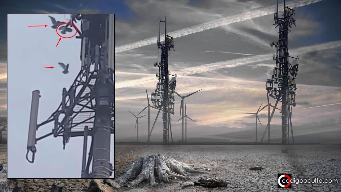 ¿Aves han empezado atacar Torres 5G? ¿Se sienten amenazadas? (Vídeo)