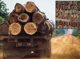 Mientras la pandemia continúa, miles de árboles de la Amazonía son derribados