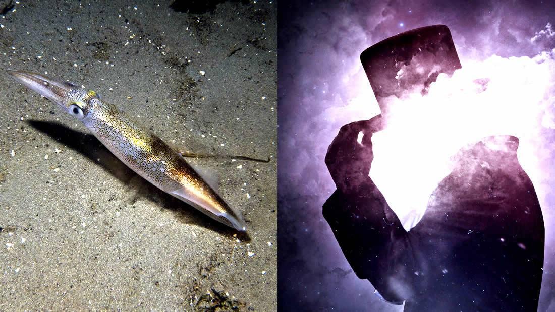 Científicos modifican células humanas para volverlas «invisibles» imitando la capacidad del calamar