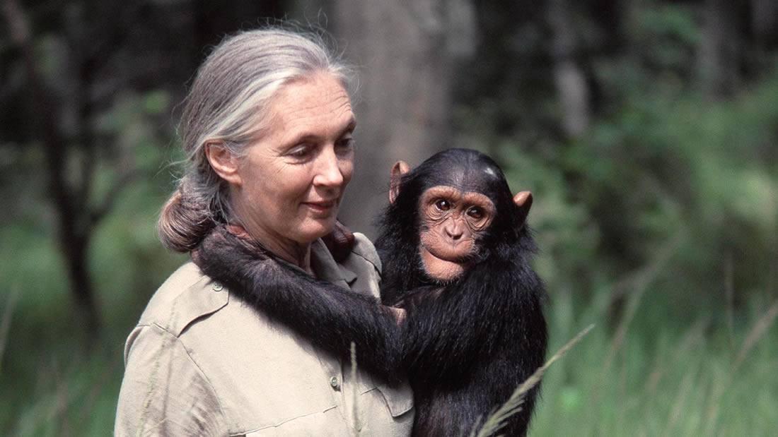 Jane Goodall: humanidad está condenada si no cambiamos luego de la pandemia