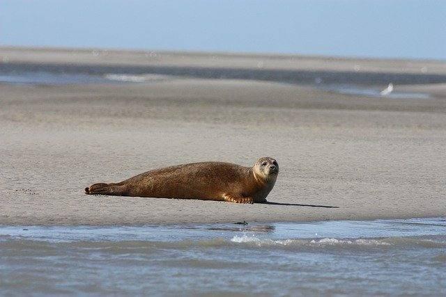 Miles de animales están huyendo hacia los polos en masa
