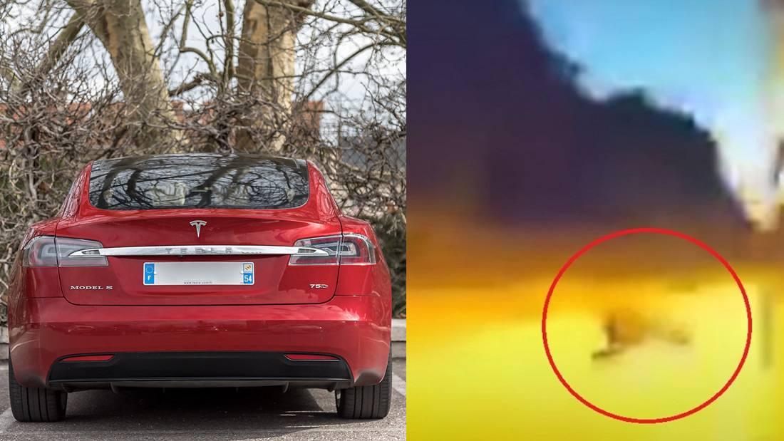 Piloto automático de auto eléctrico Tesla esquiva un cerdo en la noche y Elon Musk dice que sus autos poseen habilidades «sobrehumanas»