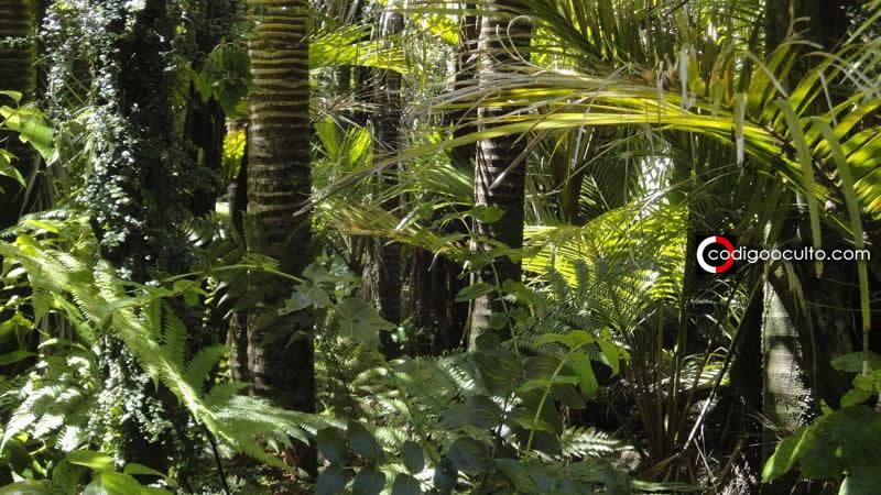 Tribu amazónica elabora Enciclopedia de Medicina Tradicional de 500 páginas