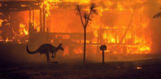 Casi 3 mil millones de animales fueron afectados por incendios forestales en Australia, revela investigación