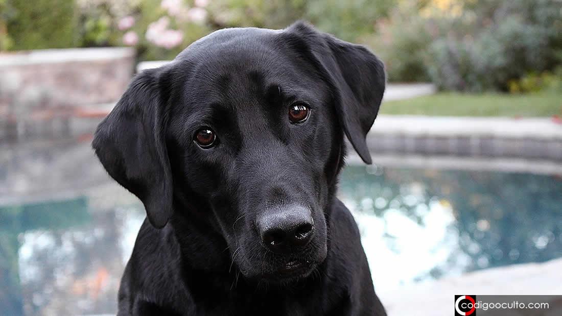Determinan que un año humano no equivale a siete años en un perro