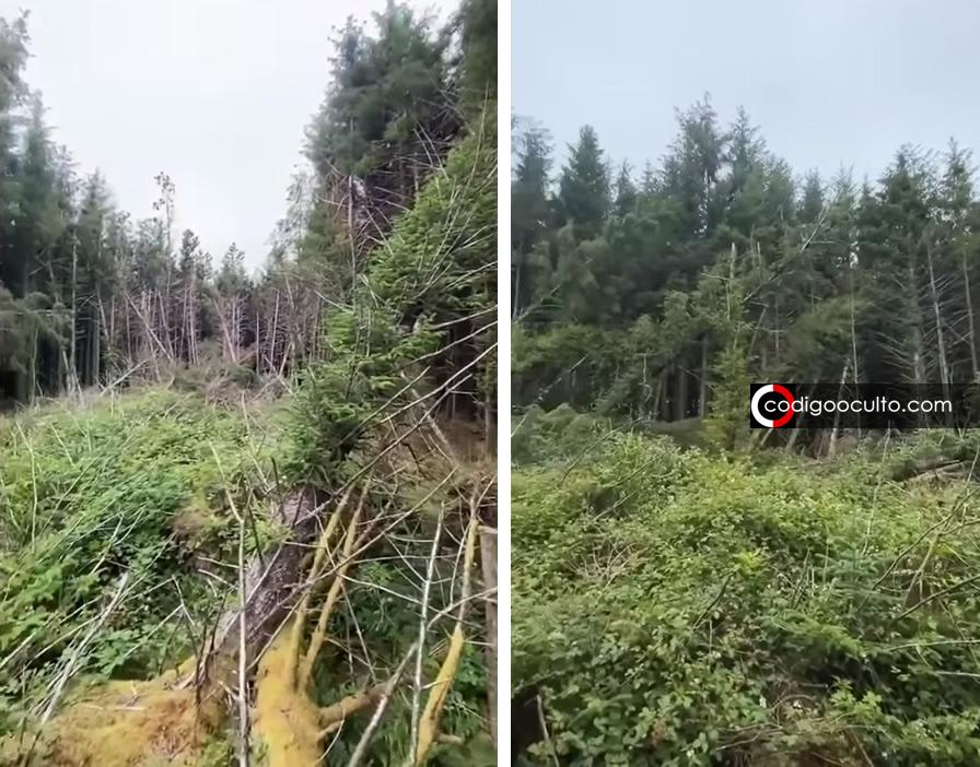 Hombre descubre posible «lugar de un accidente OVNI» en bosque de Inglaterra