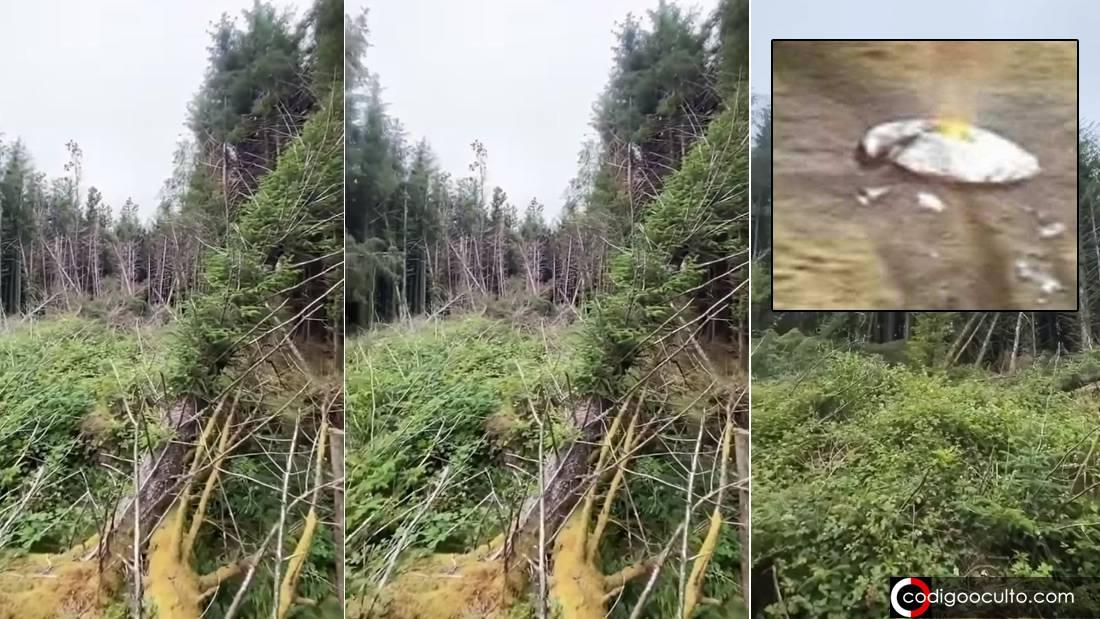 Hombre descubre posible «lugar de un accidente OVNI» en bosque de Inglaterra (VÍDEO)