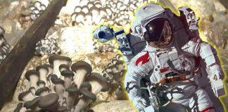 Hongo que crece en Chernóbil podría proteger a astronautas de la radiación del espacio