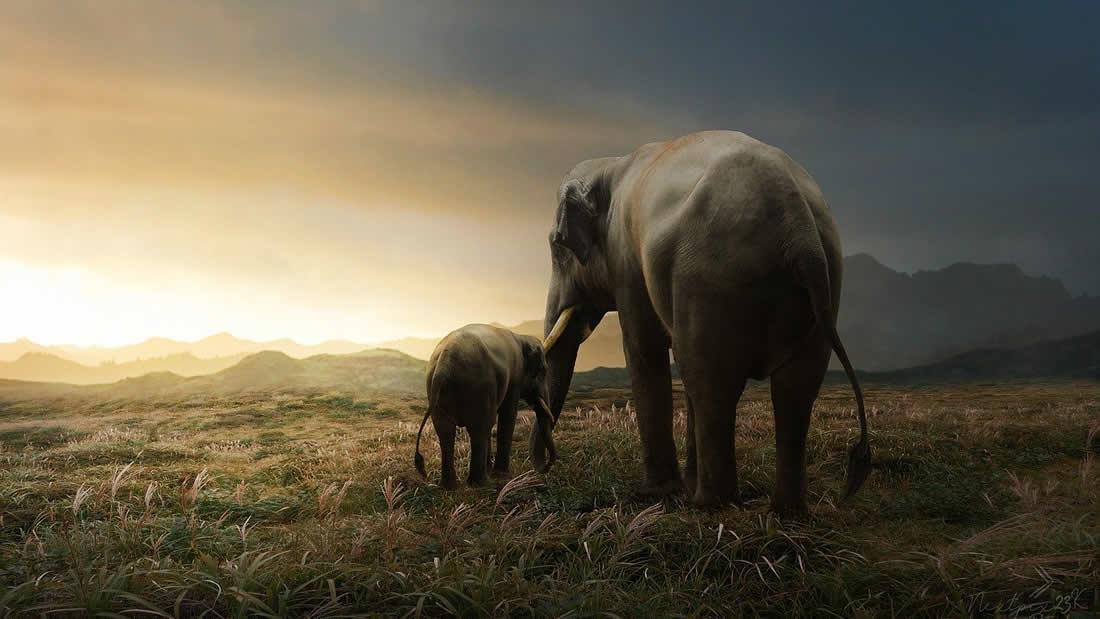 Muerte de cientos de elefantes habría sido por un nuevo patógeno que podría pasar a humanos