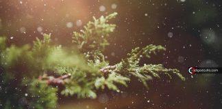 Plantas pueden enviar en secreto señales eléctricas subterráneas. Así es como lo hacen