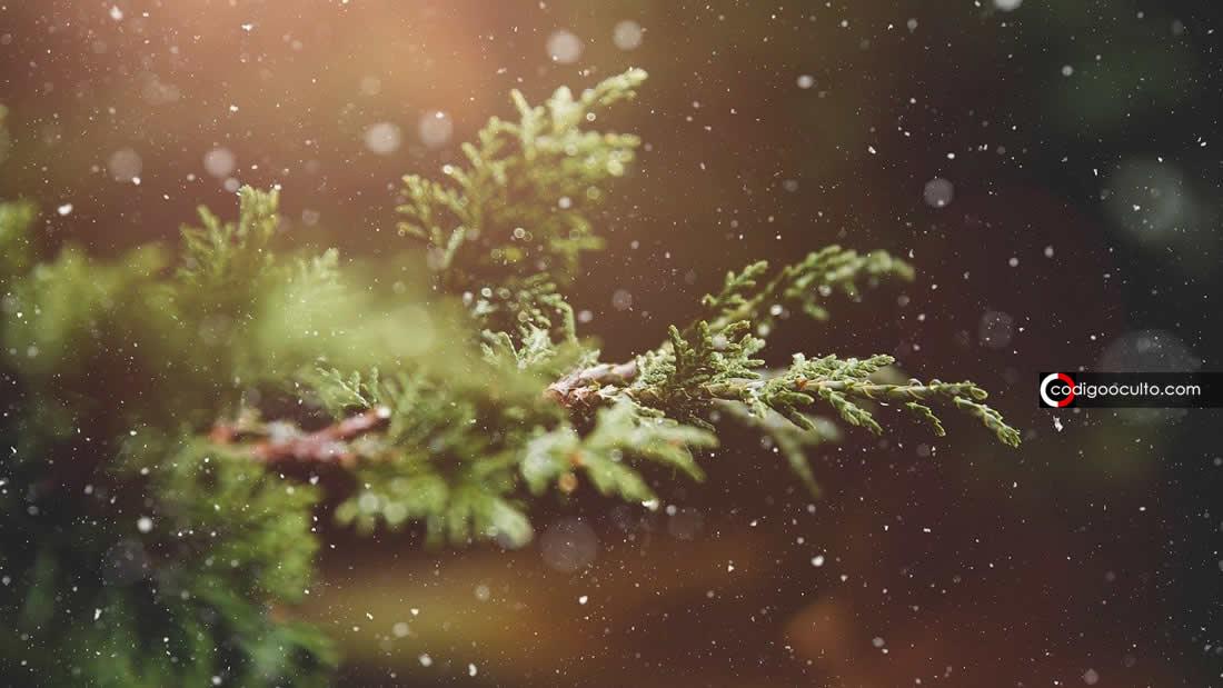 Plantas pueden enviar señales eléctricas subterráneas. Así es como lo hacen