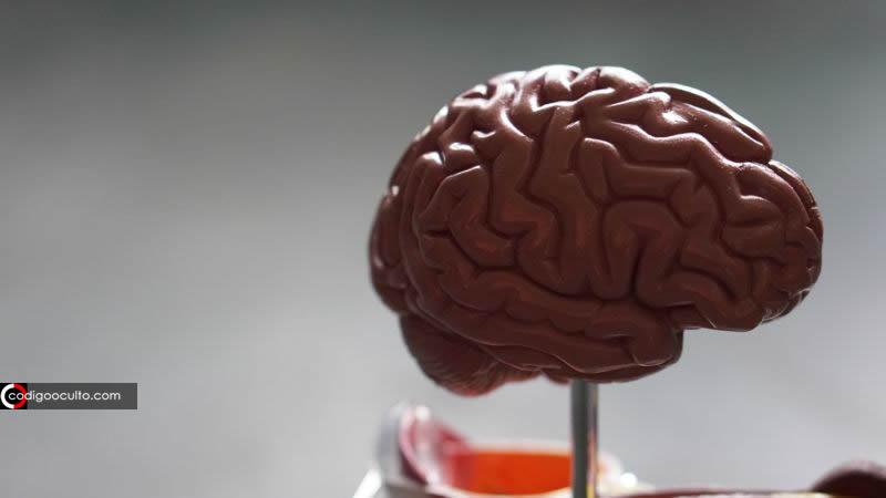 Cada vez más cerca de modificar nuestros recuerdos... ¿Listo para borrar «cosas no gratas» de tu mente?