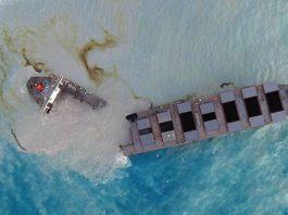 Comienzan a aparecer delfines muertos en Mauricio luego del reciente derrame de petróleo