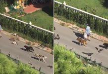 Mujer camina junto a decenas de gatos, perros y aves en las calles de Turquía