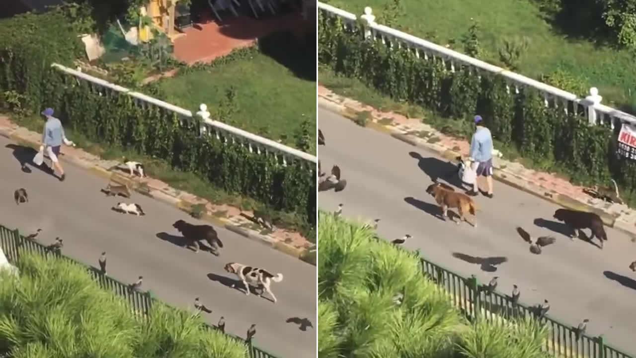 Mujer camina junto a decenas de gatos, perros y aves en las calles de Turquía (VÍDEO)
